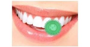 水・歯磨き粉のいらない携帯歯ブラシ「ローリーブラッシュ(6コ入)【10個セット】」